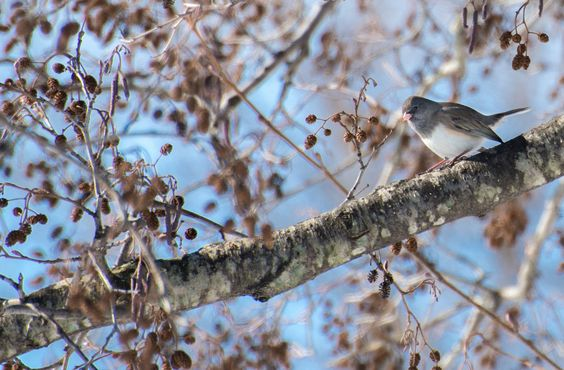 Bird after the first big snow   by Macomb Paynes