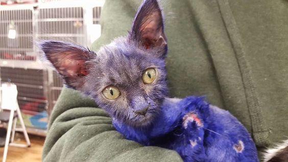 Teint en violet, ce chaton a servi de jouet pour chien - Cause animale - Wamiz
