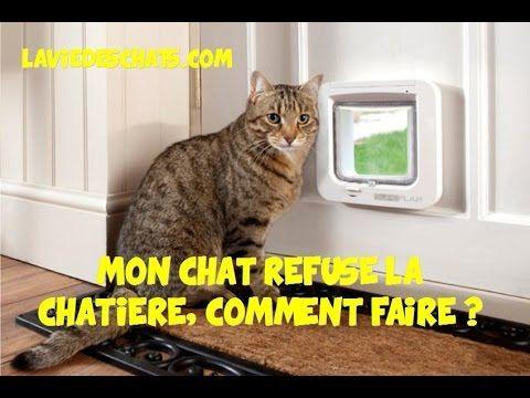 Mon Chat Refuse La Chatiere Comment Faire Chatiere Chat