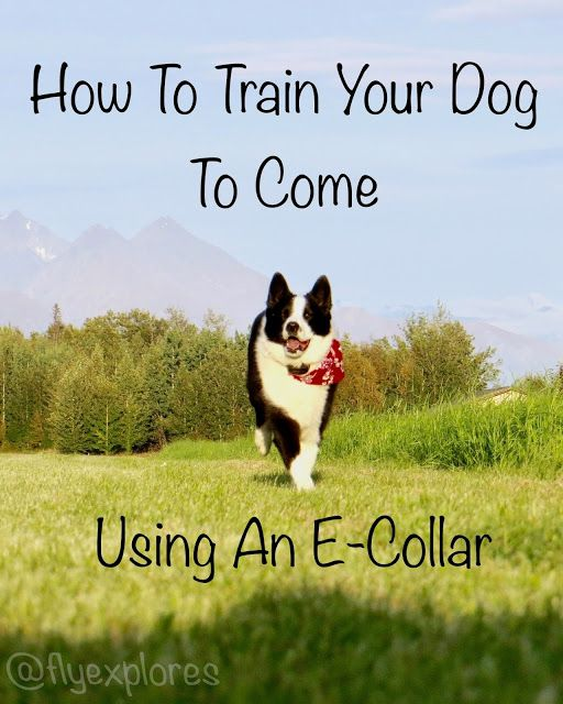 Using An E Collar For Re Call Dog Training Books Dog Training