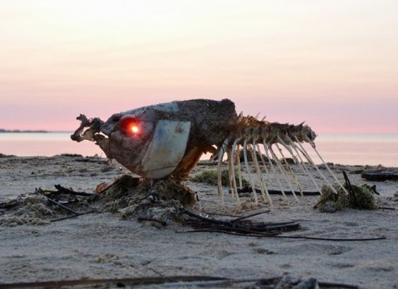 The eerie but tranquil glow of a sunrise through a dead fish's eyes...