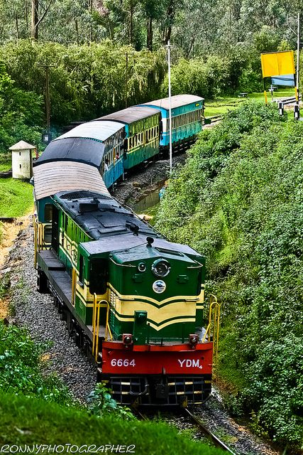 Nilgiri Mountain Railway in Ooty, Tamil Nadu, India - Nilgris Tea