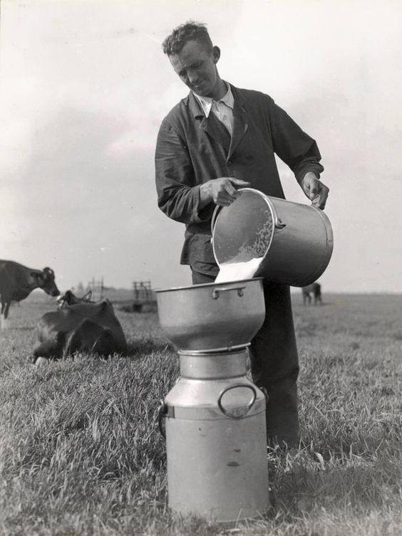 Na het 'met de hand melken' van koeien ging de melk in de melkbus: