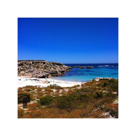 Beach at Rotness Island. #rottnestisland #australia #beach #wanderlust #wander #vacation #holiday #holidays #travel #traveler #traveling #discover #discovering #experience #nature #photo #photographer #photography  #adventure #life #denmark #dream #see #world #music #food #love #happy #summer by a_dose_of_wanderlust http://ift.tt/1L5GqLp