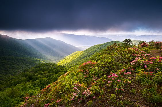 asheville nc blue ridge parkway landscape photography with spring flowers by…