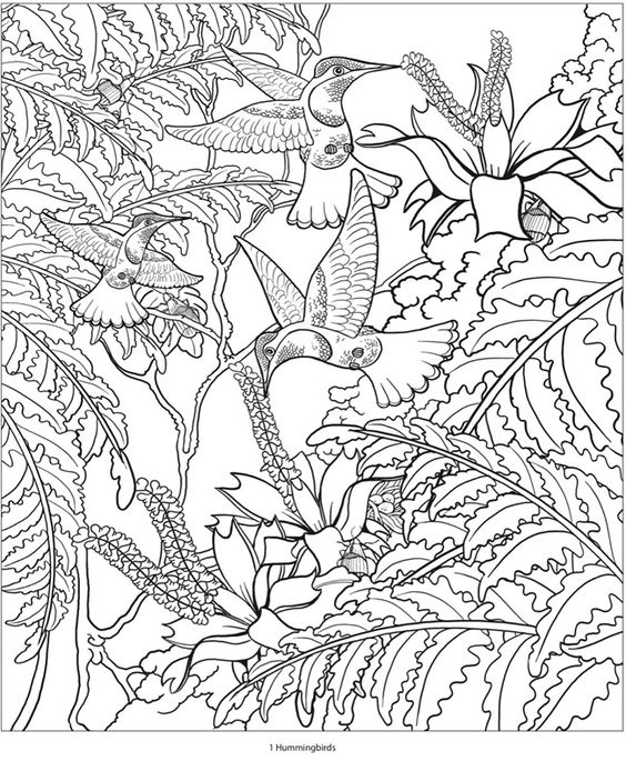 From Creative Haven Amazon Animals A Coloring Book With Hidden Picture Twist