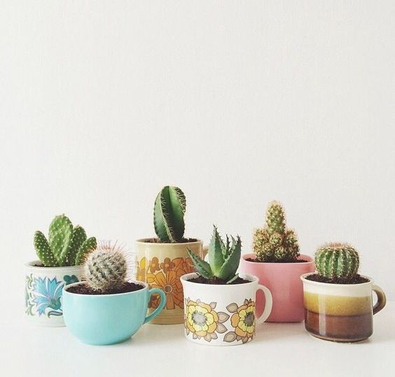 Cactus in coffee mugs.