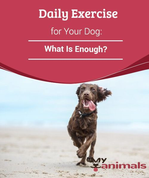 Exercise For Your Dog Is Important As Well As The Right Amount And