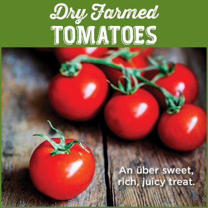 Dry farming conserves water by relying primarily on residual moisture in the soil left after the rainy season. Due to the tomato's lower water content, the result is a smaller, vibrantly red and tremendously flavorful treat. Dry farmed tomatoes boast high levels of vitamins A and C and a stronger outer skin that won't easily bruise.