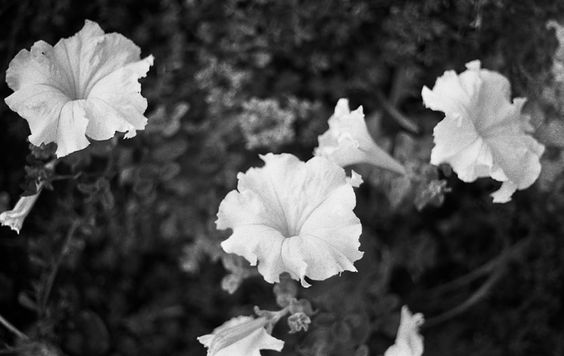 Flores | MeZ magazine. Photography: David Ruiz Polo