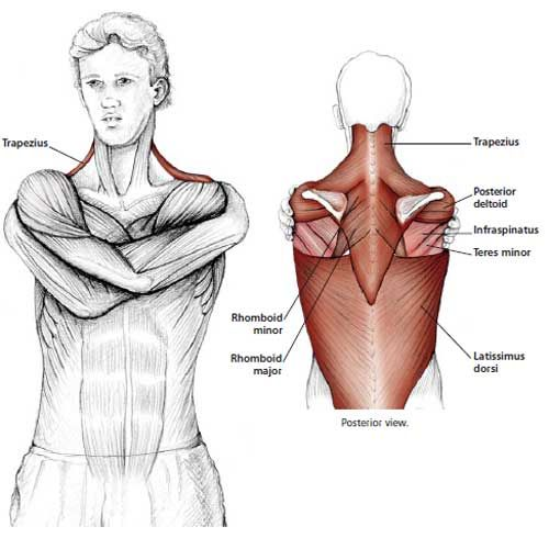 Common Neck & Shoulder Stretching Exercises | FrozenShoulder.com