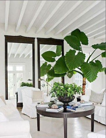 chic simplicity, large plant: