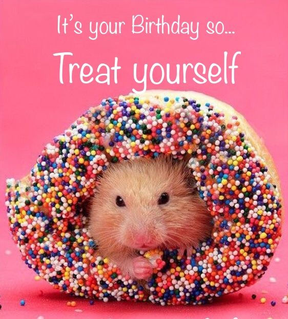 Pin By Tam On H Happy Birthday Cards Cute Hamsters Hamster Animals