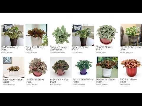Common Houseplant Identification Common Houseplant Identification Common Hous Common Hous Houseplant Identific In 2020 Plants House Plants Cactus House Plants