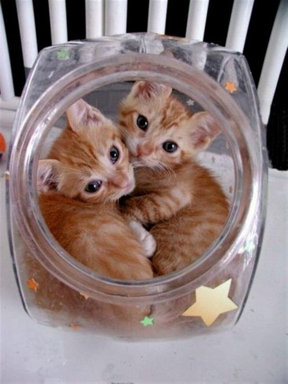 Awwww these two kittens are so cute in this candy jar thing #cute #kittens