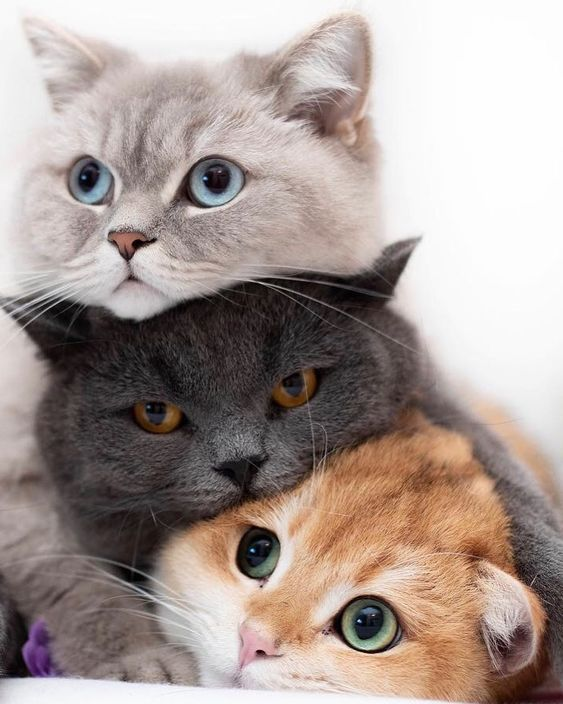 Three beautiful cats loving each other 😍 #threecats #threekitties #beautifulcats