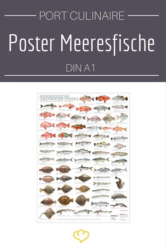 Für alle Fisch-Fans: ein Poster mit einer Übersicht aller schmackhaften Meeresfische