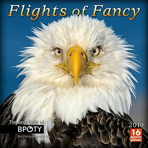 Download Pdf Flights Of Fancy The Best Birds Of Bpoty 2019 Wall Calendar Free Epub Mobi Ebooks Fancy Wall Calendar Calendar Download