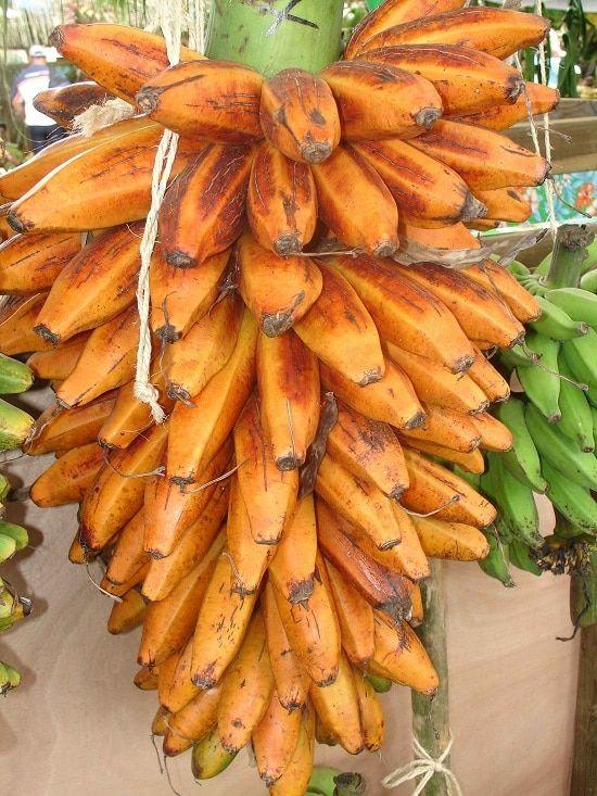 A Guide To 17 Different Types Of Bananas Keep Bananas Fresh Plantains Banana