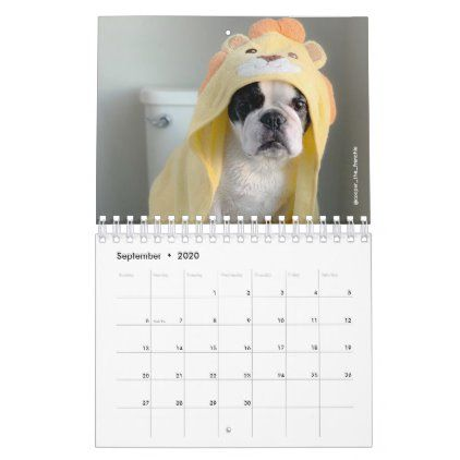 2020 French Bulldog Calendar Cooper The Frenchie Zazzle Com