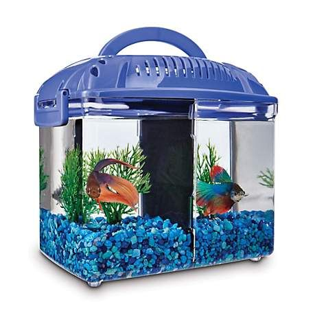 Imagitarium Betta Fish Dual Habitat Tank In Blue 0 8 Gal Petco In 2020 Betta Fish Betta Fish Tank Fish Supplies