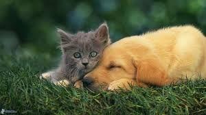 Image result for hund und katze freunde