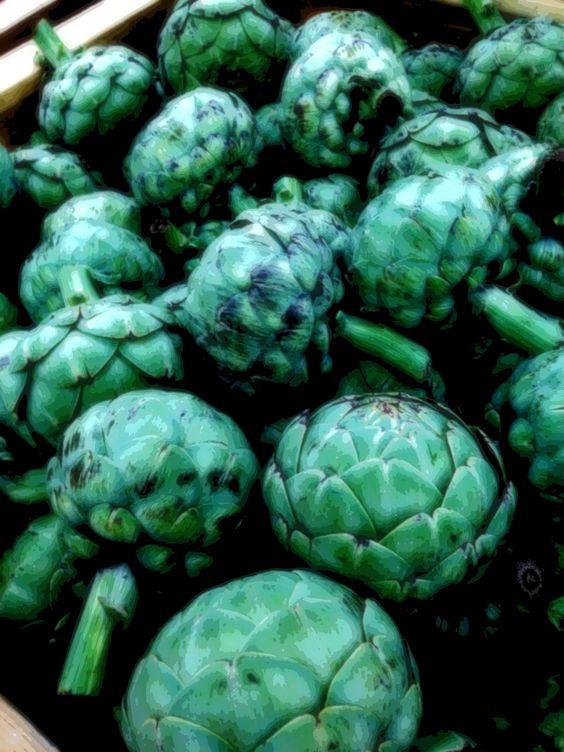 Lush verdant king artichokes
