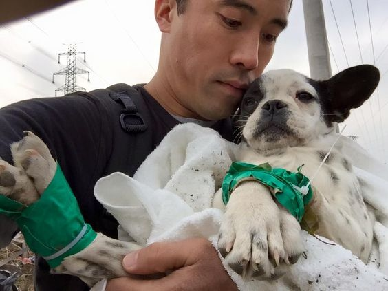 Article - This is a hero.Rescuing dogs from korean dog meat trade.