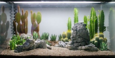 how to make a terrarium from a fish tank