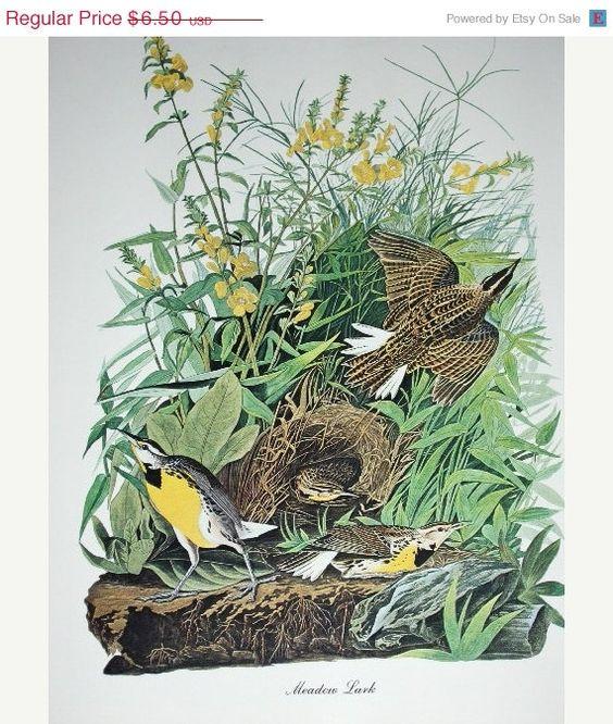 25 SALE Vintage 1960s Print Meadow Lark 8 1/2 x 11 by raesvintage, $4.88