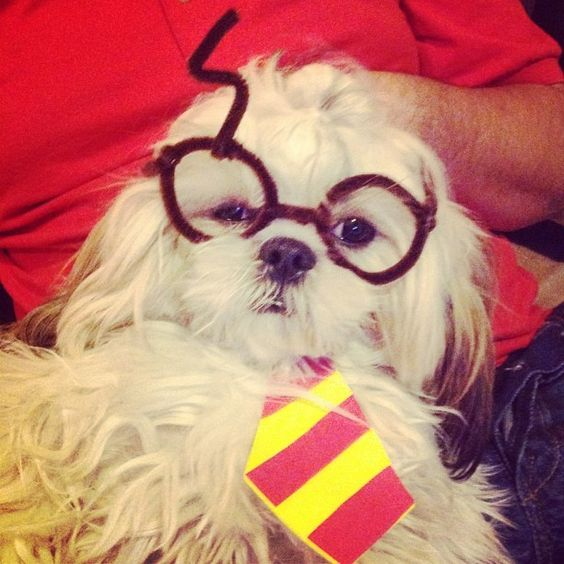 Ready for Halloween! #harrypotter #dogs