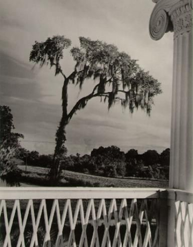 Enchanted Tree, 1947 Clarence John Laughlin