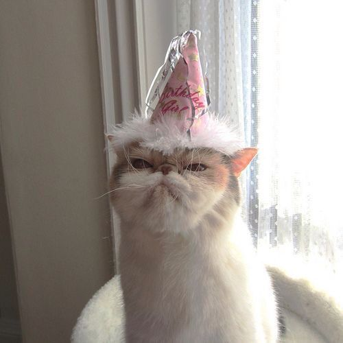 Not Happy Cat In Birthday Hat