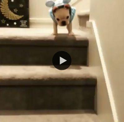 Cachorro descobre jeito rápido de descer escada.