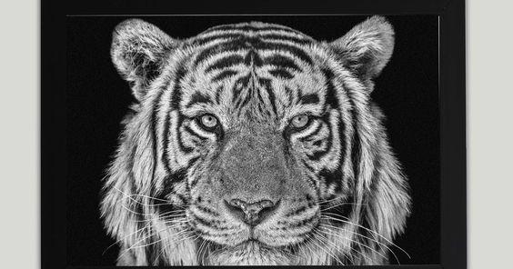 Terbaru 15 Gambar Harimau Hitam Putih Ralat Petikan Dari Sungai Batu 500bc Download Simpan Gambar Hewan Harimau Putih Grat Menggambar Harimau Hewan Binatang
