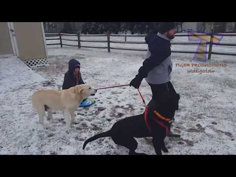 Funniest Dogs In Snow Compilation Haven T Seen Better Yet Enjoy