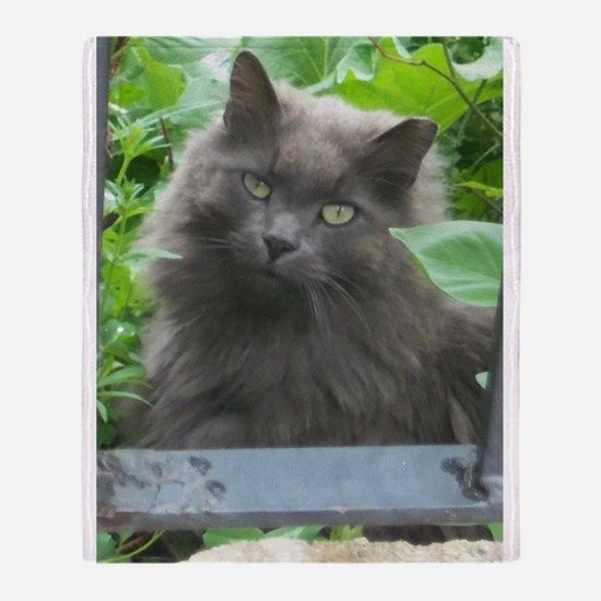 Lyingcat Mug Russian Blue Blue Cats Beautiful Kittens
