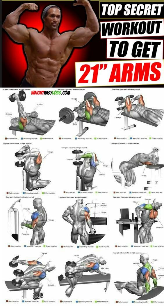 Pin On Biceps Triceps