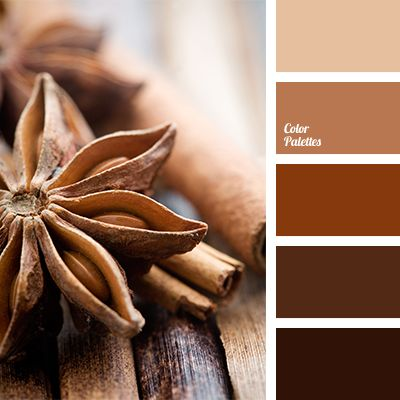 Brown And Beige Cinnamon Color Color Combination In The