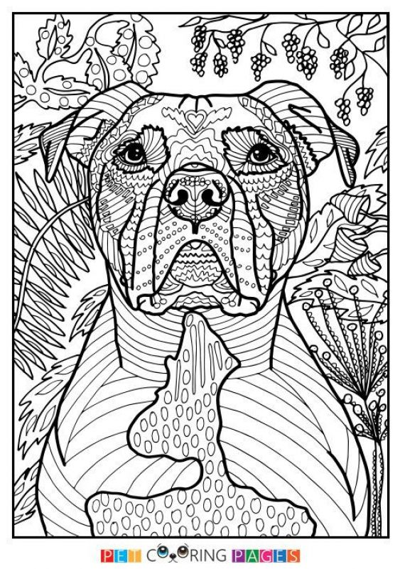 Free Printable Pitbull Coloring Pages Best Of 575 Best Printable Coloring Pages Pitbull Coloring Pa Dog Coloring Book Dog Coloring Page Animal Coloring Pages