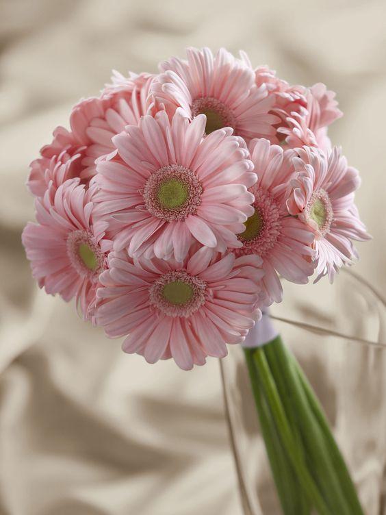 Pink Gerbera Bouquet - Interflora