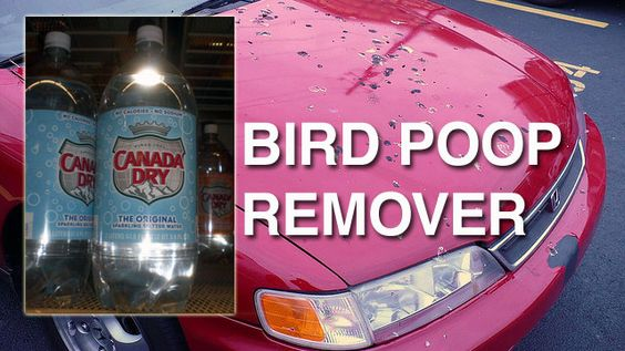 DIY, Remove Bird Droppings From Your Car with Seltzer Water.