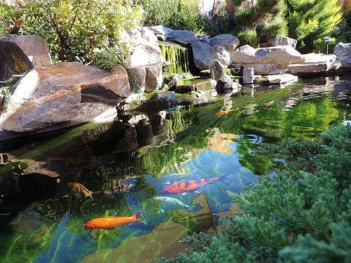 Koi pond pond pinterest photos koi ponds and beautiful for Beautiful koi ponds