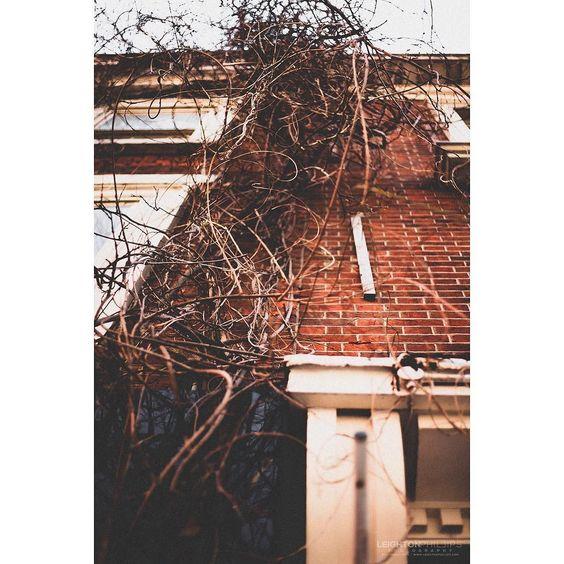 STREETS OF LONDON - Series 5:14 . . . . . #igl8 #london #severndials #pavement #sidewalk #vines #creeper #shop #wall #climber #bare #urbanstreets #lookup #street #streetphotography #canon #canon5dmkii #urban #moody #tone #thepresetfactory #equinoxv2 #fineartphotography #fineart