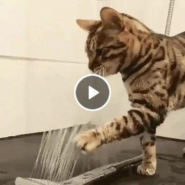 Gatinho está querendo lavar o rosto no chuveiro