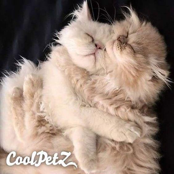 The sleepers in progress | Uykucular iş üstünde. #cat #catlover #pet #petlover #coolpets #CoolPetZ