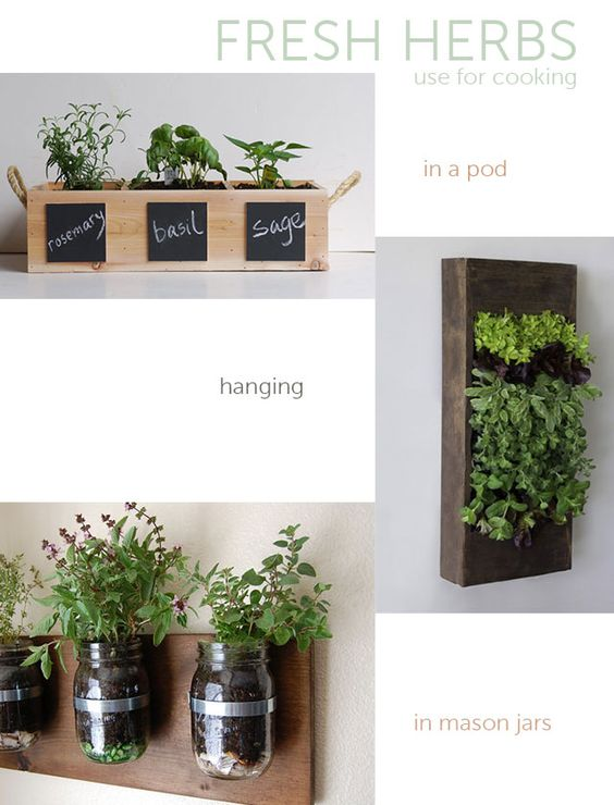 Easy indoor plants for urban gardening ideas inspiration for Indoor gardening made easy