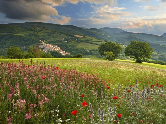 Spring flowers growing in the Valnerina. Umbria, Italy.
