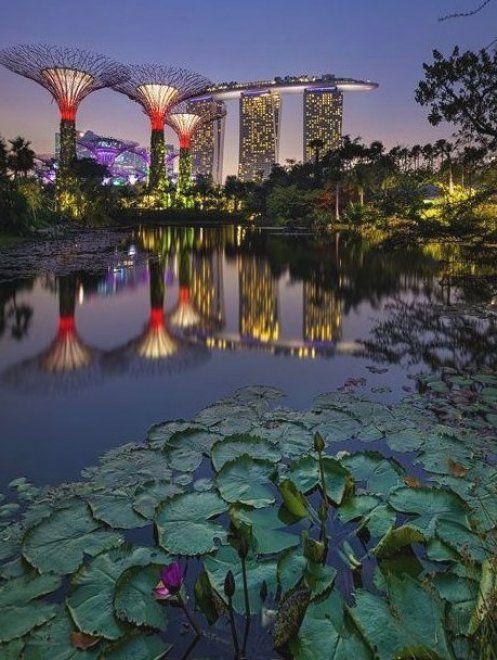 Gardens By The Bay Dragonfly Bridge