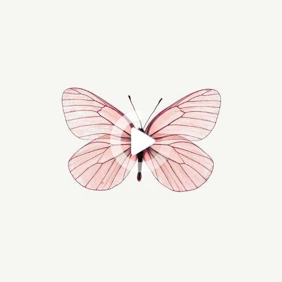 Pink Butterfly Photographic Print By Photoinc At Allposters Com In 2020 Butterfly Art Print Pink Butterfly Butterfly Drawing